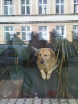 fauler Hund_2011
