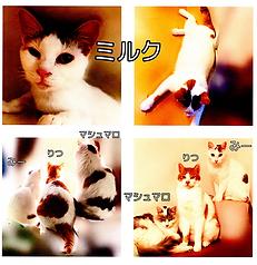 写真 2020-09-11 坂井市春江町中庄 西端さん(オレンジ)①.png