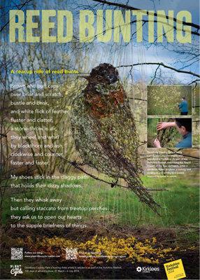 Poetry bird posters (x4)