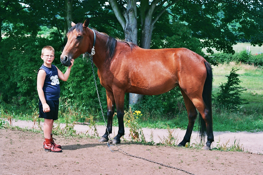 Image horse and boy.jpg
