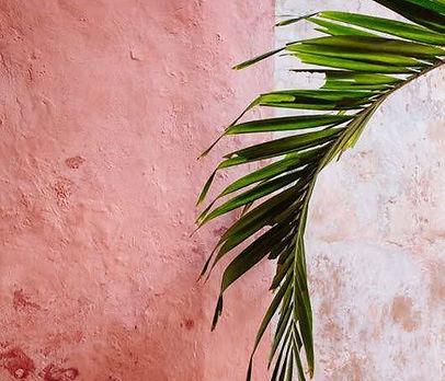 tropical 1.jpg