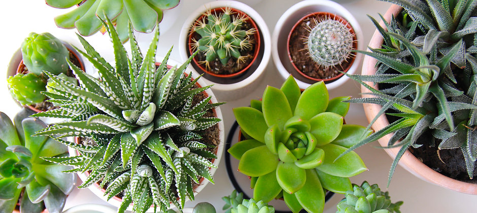 Overhead photo of succulents on a white tabletop