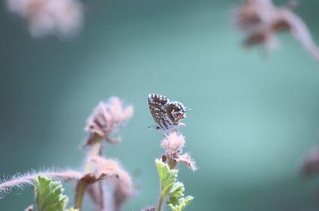 Butterfly on Branch_edited.jpg