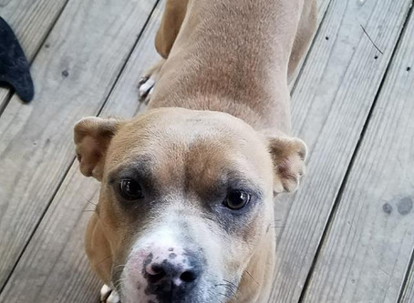 Dog of the Week: Rizzo!
