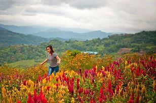 sirao flower garden2.jpg