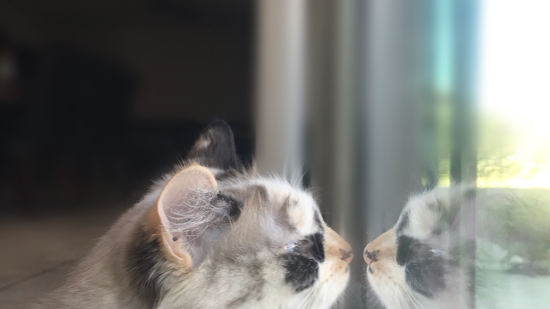 A Cat's Reflection