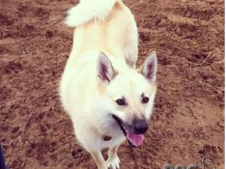 Finn has been lost since the 11th April £850 REWARD for Finn's safe return home