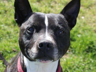 Tyson Needs a Home, can you help?