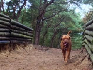 Volunteers help to launch Sefton's Good Dog Code