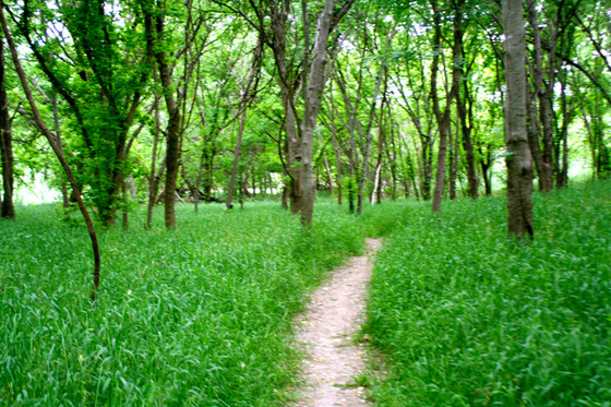 A trail to visit
