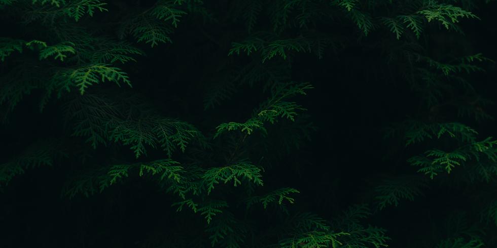Foliage.png