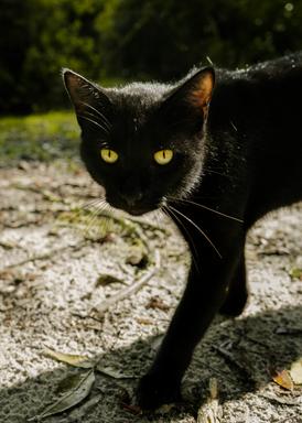 Cat Photoshoot
