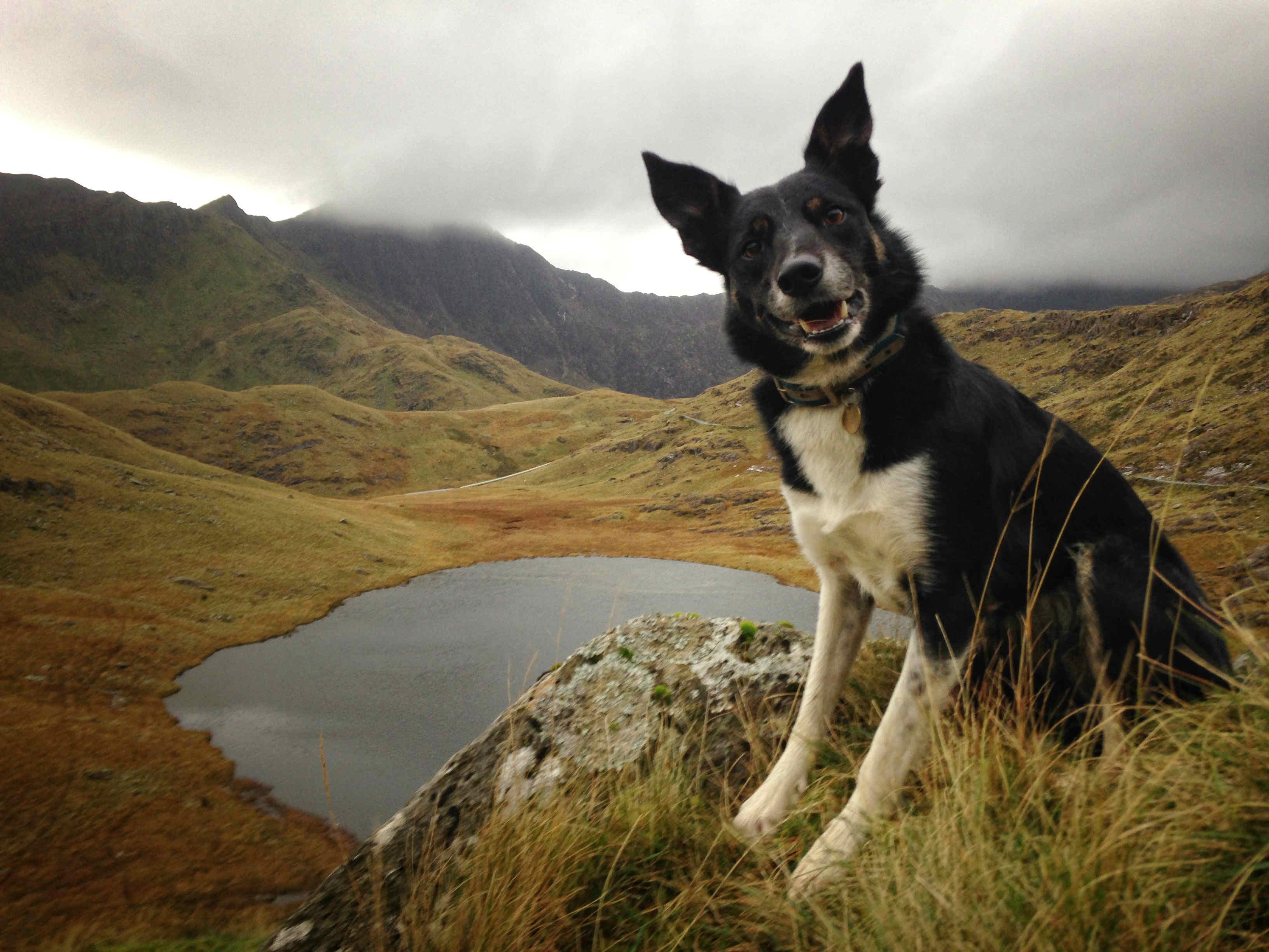 Kipi in Snowdonia