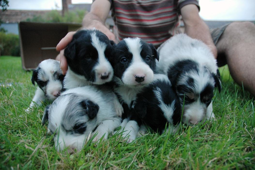 Puppy pyramid.