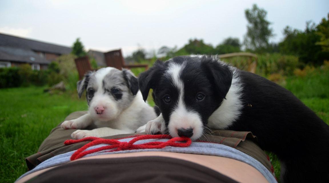 Lennox & Bruno 5 weeks