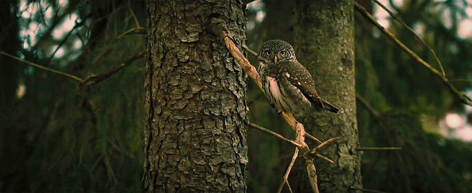 owl-918427_1920.jpg