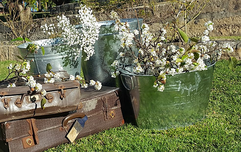 cropped buckets.jpg