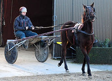 Gavin Smith Racing Stables - Yearling