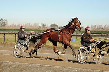Gavin Smith Racing Stables - Horses