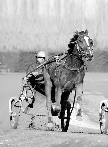 Gavin Smith Racing Stables - BW