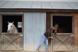 horses-in-barn-Maria-05