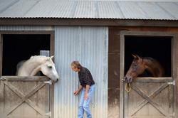 horses-in-barn-Maria-01