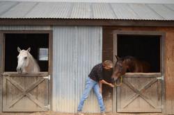 horses-in-barn-Maria-06