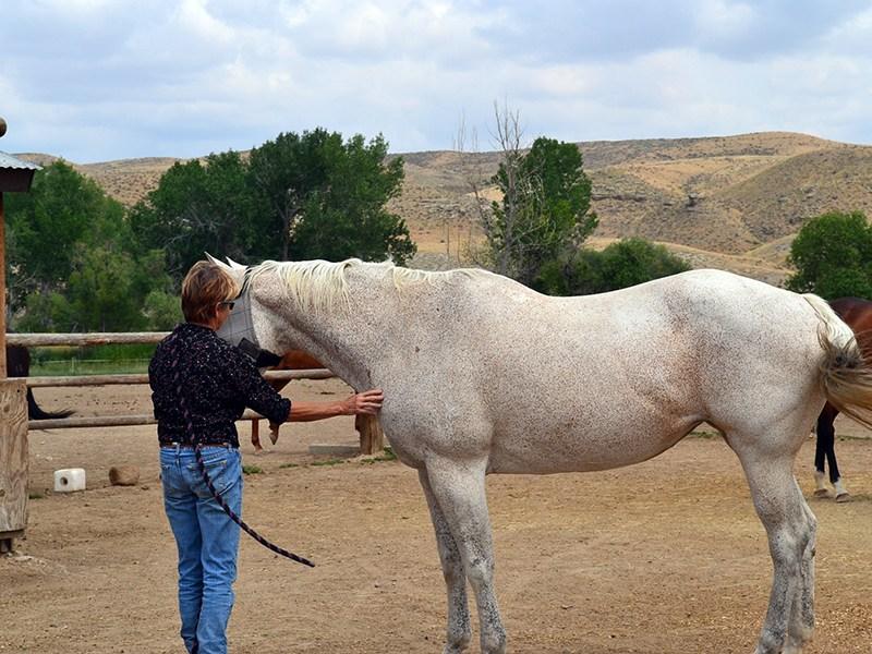 Ranch-23