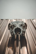 gateway-veteran-hunt-skull.1.jpg