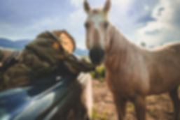 tan-pack-horse-side.1.jpg