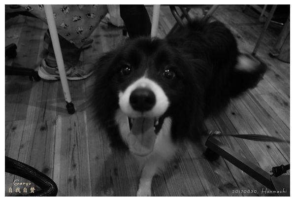 0830_Dog_Jiga.jpg