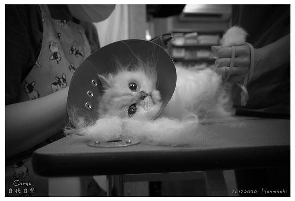 0830_Cat_Jiga.jpg