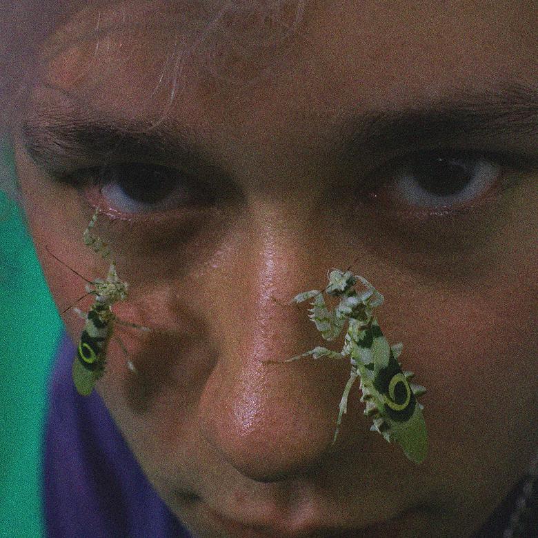 mantis lino camilo.png