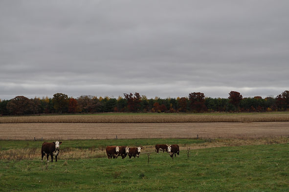 Brookview Acres Wisconsin Cows 3.JPG