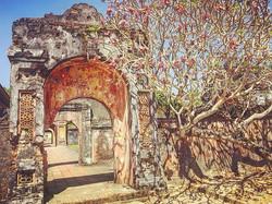 Ancient tree.Hue, Vietnam.