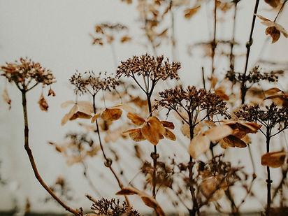 pexels-flora-westbrook-1924867.jpg