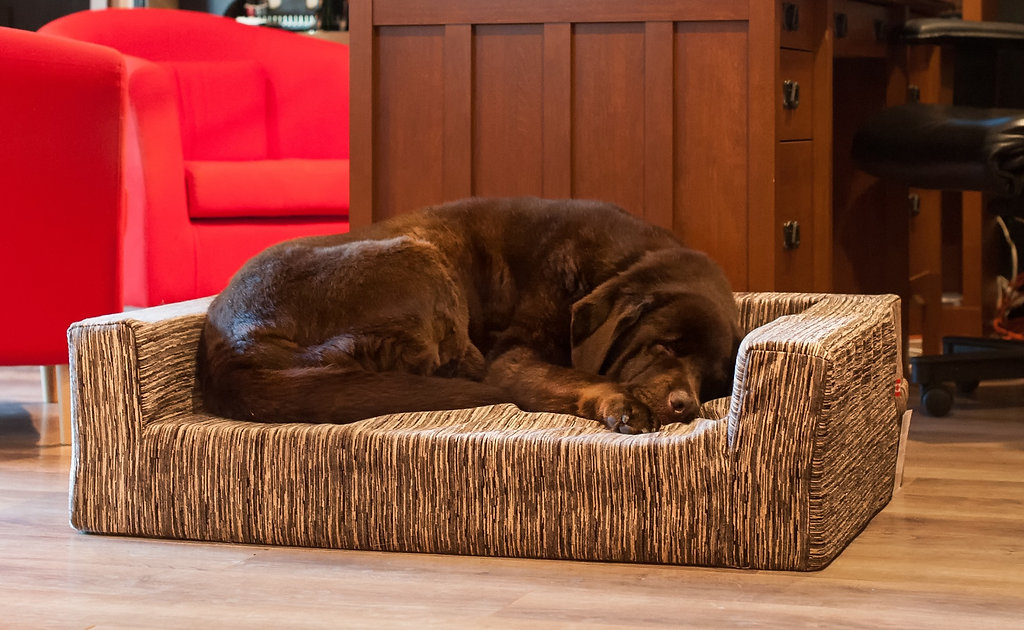 What's the best dog bed | JettaJacks