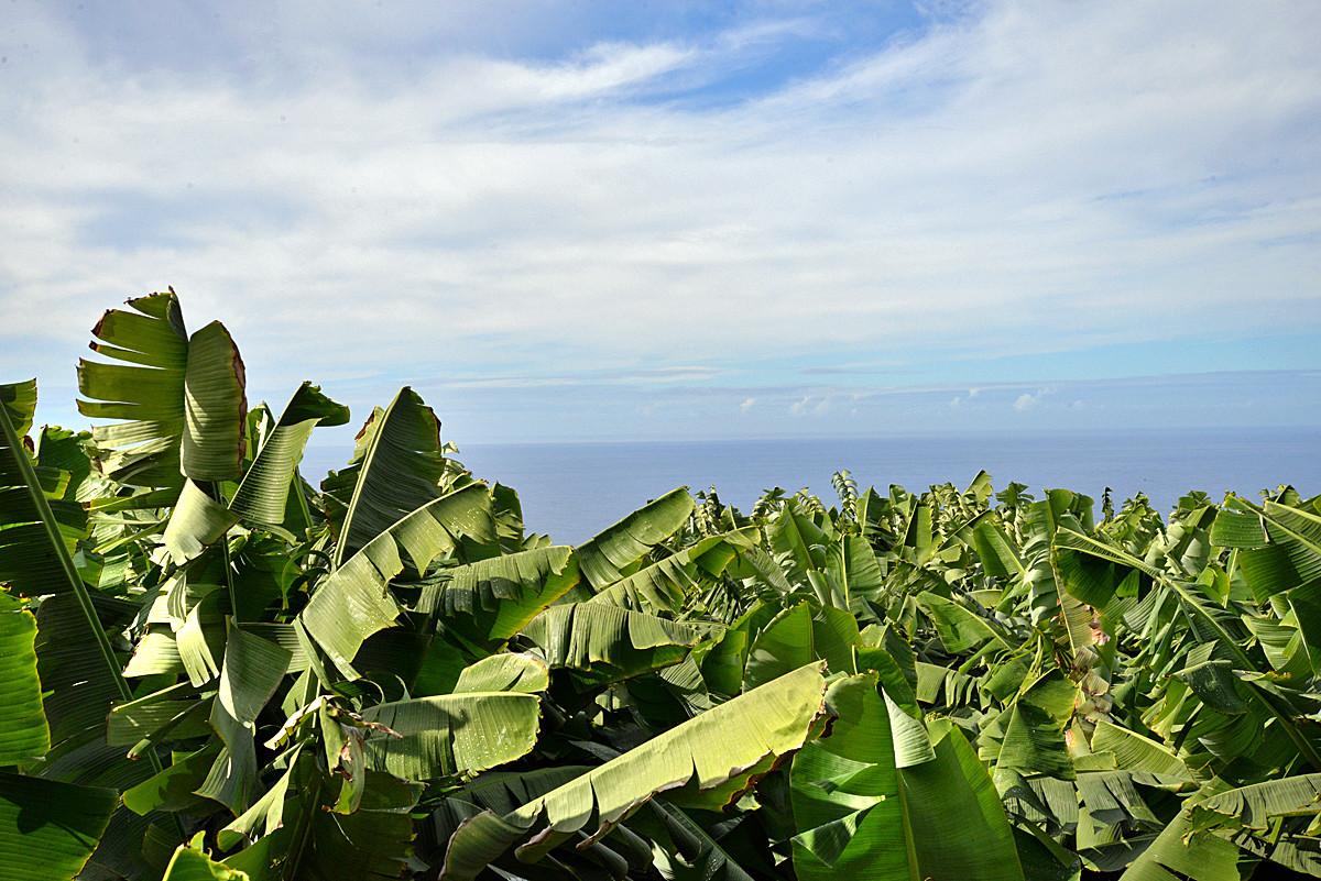 La Palma, Bananenplantage