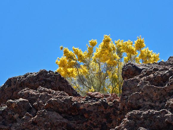 Los Cancajos Fauna und Flora