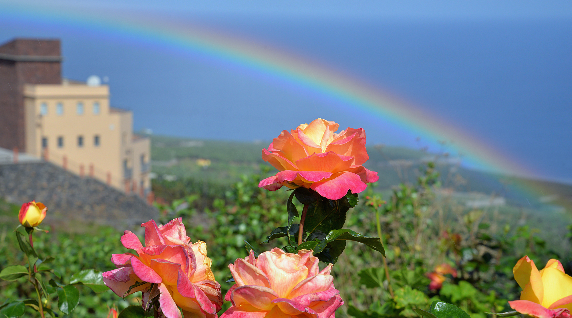 La Palma, Rosen und Regenbogen