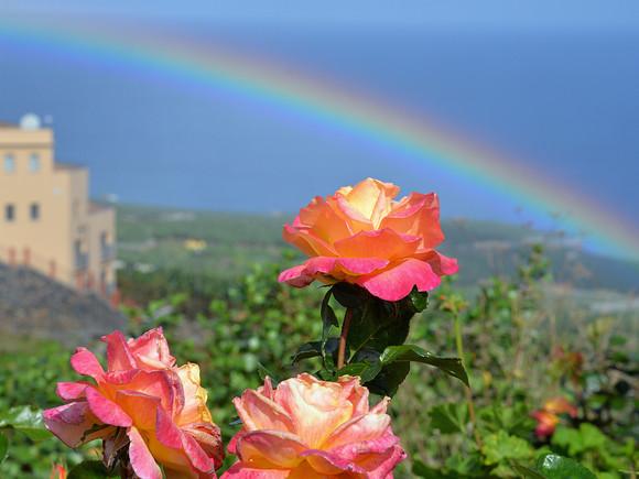 La Palma, Regenbogen mit Rosen
