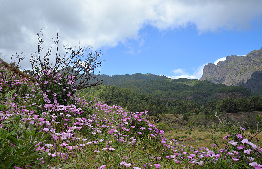 La Palma, Fototour im Frühling