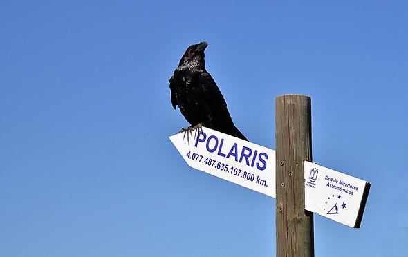 Rabe La Palma - Polaris