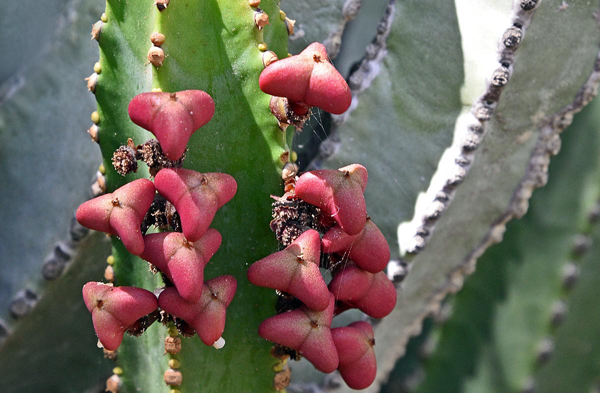 La Palma, botanische Tour