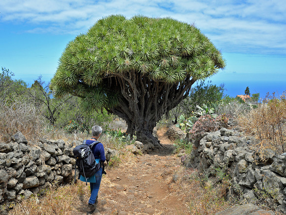 La Palma, Drachenbaum Tour, Wanderung