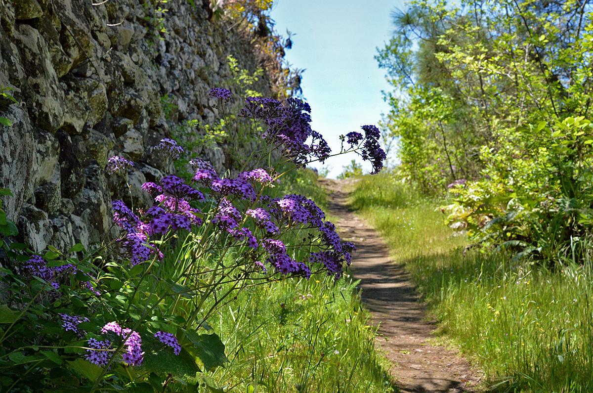La Palma, Wanderung im Frühling