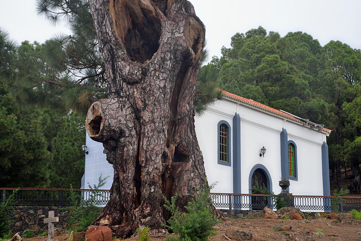 La Palma, Virgen del Pino, El Paso