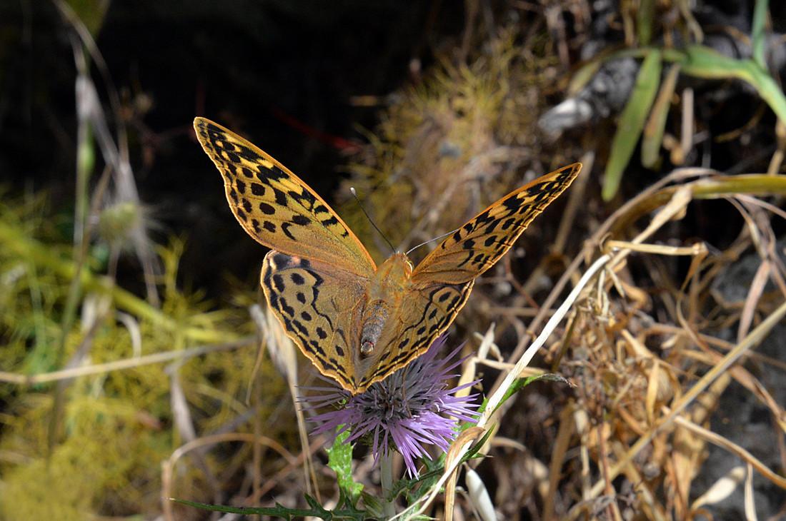La Palma, Schmetterling, botanische Tour