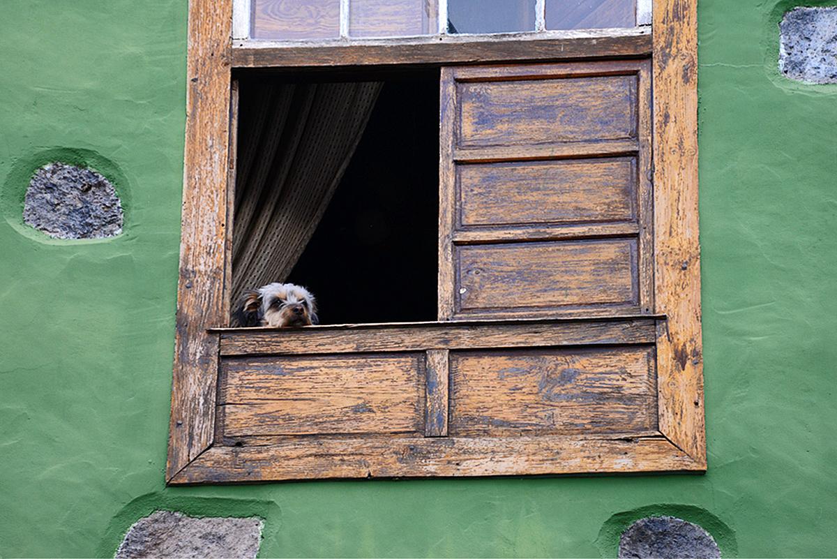La Palma, Impressionen, Hund im Fenster