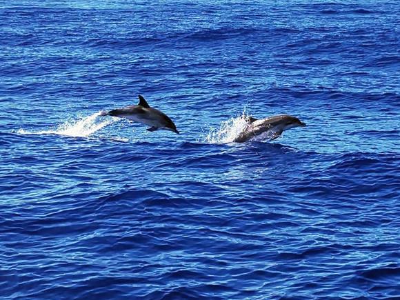 La Palma, Delfine